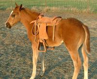 Sooner Appaloosa Horse Club :: Our 2005 Foals